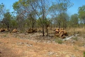 Day 24 Termite hills near Derby