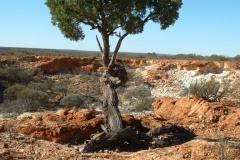 Day 7 de la Poer Range tree