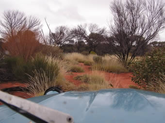Spinifex and bushes crowd the track on the edge of the Great Victoria Desert