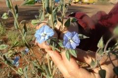 Day 15 Cobra Station blue wildflower