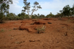 Day 15 Tropic of Capricorn early morning